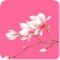 >花瓣直播apk